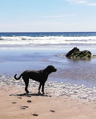 Dog friendly holiday cottages near Looe